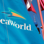 3 Things Not to Miss at SeaWorld San Diego