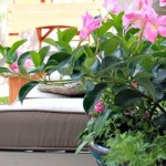 Easy Container Gardening Tips For a Perfect Potted Plant