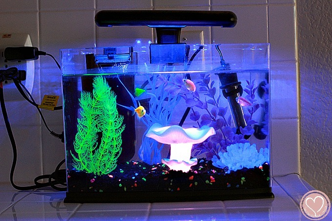 GloFish Aquarium Review: Everything To Know Before You Buy